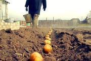 В России борются с бедностью. Чиновники предложили не считать бедными тех, кто может выращивать картошку