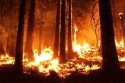 В МЧС прокомментировали высказывание о том, что тушить леса в Сибири - невыгодно