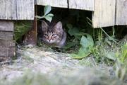 Ученые объяснили, почему кошки едят траву