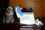 Самые популярные коты в Риге взволнованы