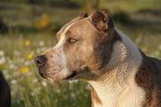 Сотрудники МЧС рассказали, как словом остановить пытающуюся напасть собаку