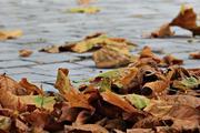 Синоптики: ноябрь в России ожидается тёплым