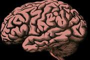 Мозг мертвых людей начнут оживлять в США