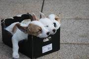 В Воронежской области дети отбили у живодера пять щенков