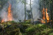 За сутки на Дальнем Востоке сгорело около 11 тысяч гектаров леса