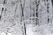 В лесах Подмосковья постоянно теряются люди