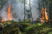 Опубликовано видео, как поезд проезжает через горящий лес