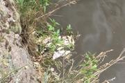 Эксперт объяснил массовую гибель рыбы в реке Миасс в Челябинске