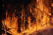 Число жертв лесных пожаров в Греции вновь увеличилось