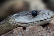 Из квартиры в Москве сбежали 18 ядовитых змей