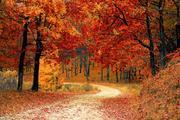 Стало известно, когда в Москву придет настоящая осень