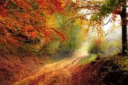 Простые советы, как укрепить иммунитет осенью