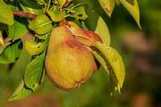 Назван фрукт, который защитит ваш организм осенью