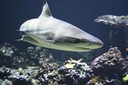 Сотрудница торгового центра в Китае упала в бассейн с гигантскими акулами