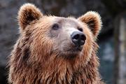 Медведь убил школьника на Камчатке