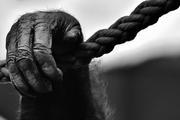 В Индии обезьяна выкрала у матери младенца и оставила его умирать на крыше