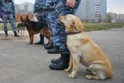 """Десять московских ТЦ эвакуировали после сообщений о """"заложенной бомбе"""""""