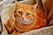 Милонов предложил ввести закон, запрещающий наказывать котов