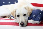 Собака Джорджа Буша-старшего провожает хозяина в последний путь
