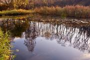 Таксист влетел в пруд в Московской области