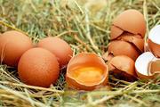 Диетолог рассказал о «вредном» и «хорошем» холестерине