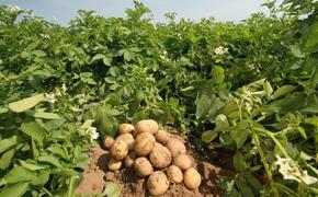 Разбор картофельных полётов