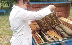 Пчелодёры из ФАНО