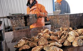 Дань моллюсков