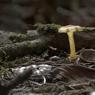 В Канаде найден гриб, возраст которого достигает 1 млрд лет