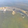 В Челябинске проведут капитальную очистку реки Миасс