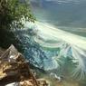 Жителей Саратовской области насторожила сине-зеленая вода в пруду