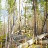 Жителям Курской области запретили ходить в лес