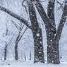 Глобальное потепление перенесло выпадение снега в Москве