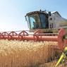 Урожай зерна в этом году достигнет 118 млн тонн