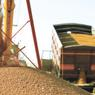 Французов напугала российская пшеница
