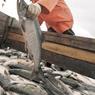 Рыбалка снова вышла вплюс