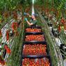 Зерно падает, овощи растут