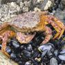 Учёные посчитали рыбу и крабов в Охотском море