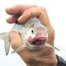 Рыбу Дона пора спасать