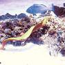 Жестокое Красное море– 2
