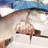 На Волге и Каспии отличная рыбалка, но ловить скоро будет нечего