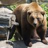 В Хабаровском крае наблюдается нашествие медведей