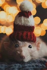 Популярные в сети новогодние мемы и шутки про крысу - символ 2020
