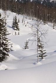 На Чукотке нашли оленевода, который заблудился в тундре и 16 дней жил без еды