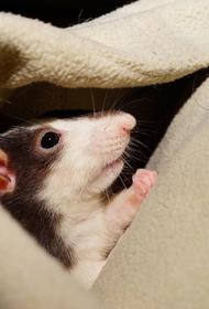 После новогодних праздников россияне начали выбрасывать крыс и мышей