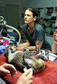 Обычный герой: латвийский ветеринар уехал в Австралию, чтобы спасти животных