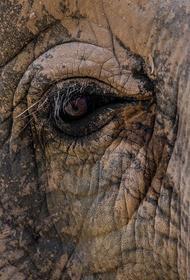 Тайские школьники на слонах провели марш скорби по погибшим австралийским животным