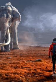В Индии дикий слон отказался от фотографии с туристом и погнался за ним