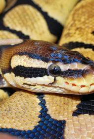 Жительница Тулы зашла в туалет своей квартиры и увидела змею, выползающую из унитаза