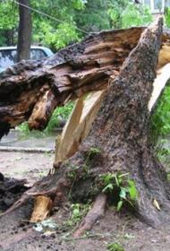Срок до четырех лет и штраф в 300 тысяч грозят сироте за расчистку школьного двора от поваленных деревьев